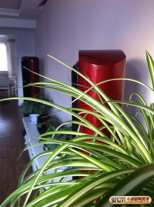 绿植.jpg